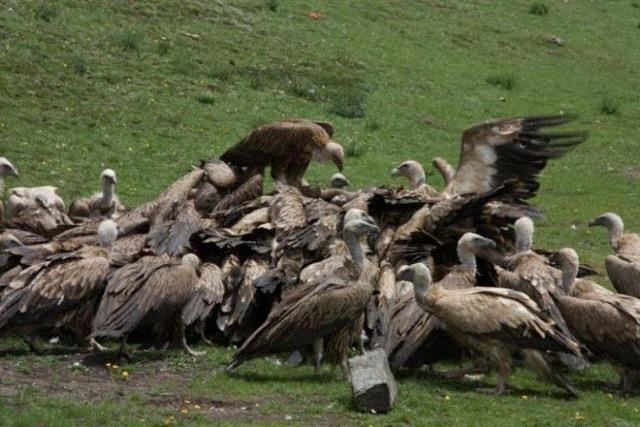 鳥葬儀.jpg